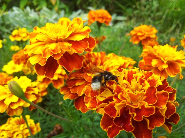 Proti škůdcům s přírodou a bez chemie