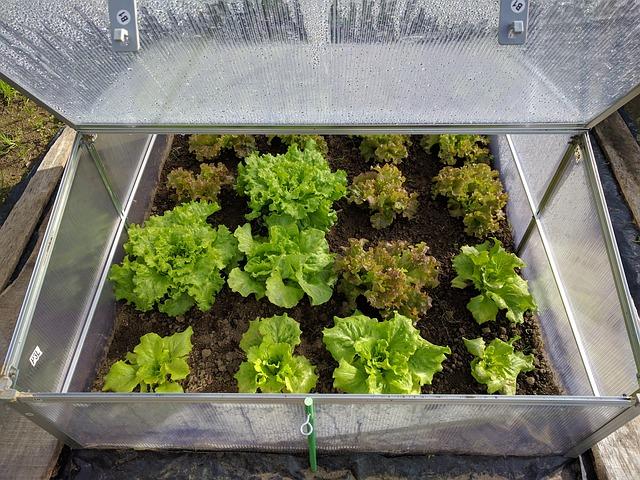 Zahradník radí aneb malé skleníkové rady
